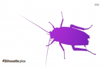 Cockroach Silhouette Vector And Graphics