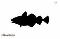 Tilapia Silhouette Image And Vector