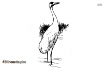 Crane Bird Outline Silhouette Picture
