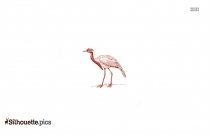 Crane Bird Silhouette Outline