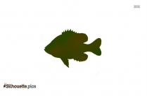 Walleye Fish Outline Drawing