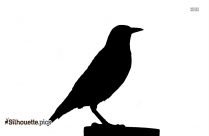 American Crow Flying Silhouette Vector And Graphics