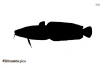 Saltwater Fish Silhouette Drawing