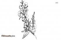 Scabiosa Flower Silhouette Clipart