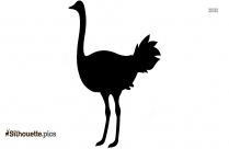 Baby Chickens Pictures Hd Silhouette