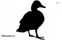 Duck Hd Image Silhouette