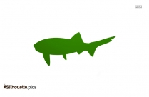 Pike Fish Silhouette Vector And Graphics
