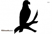 Eagle Sitting On Tree Branch Silhouette