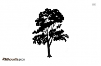 Eucalyptus Tree Drawing Silhouette