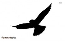 Flying Eagle Silhouette Picture