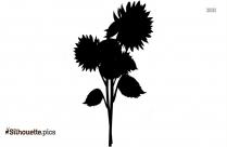 Black Sunflower Silhouette Image