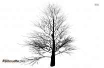 Black And White Tree Drawing Silhouette