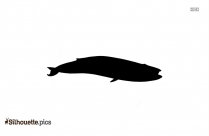 Sturgeon Fish Picture Silhouette