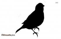 Finch Clipart Bird Png Vector Silhouette
