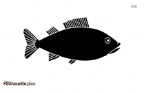 Scrod Fish Silhouette Illustration