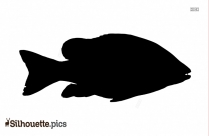 Fish Silhouette Images