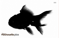 Fish Silhouette Free