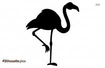Ostrich Silhouette Transparent