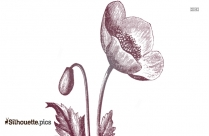 Flower Silhouette Pencil Drawing