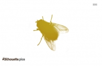 Fly Silhouette Clip Art Image