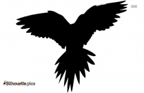 Lorikeet Bird Silhouette