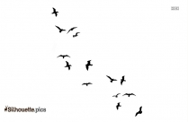 Flying Birds Silhouette Picture