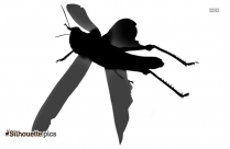 Flying Insect Silhouette Vector And Graphics