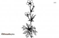 Bluebell Flower Silhouette