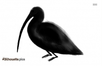 Tumbler Pigeon Silhouette For Download