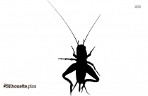 Free Cockroach Silhouette Image