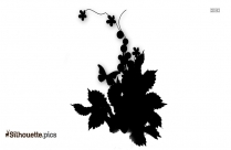 Forget Me Not Flowers Silhouette Vector And Graphics