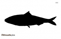 Fish Drawing Silhouette Vector And Graphics
