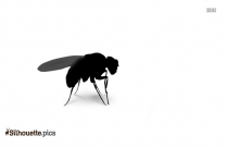 Fruit Fly Silhouette