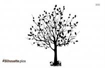 Black Acacia Tree Silhouette Image