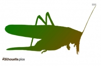 Grasshopper Silhouette Background