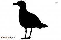 Gull Silhouette Image And Vector