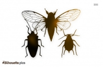 Hemiptera Silhouette Image And Vector