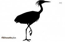 Macaw PNG Transparent Silhouette