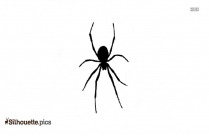 House Spider Silhouette Drawing