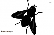 Housefly Silhouette Vector And Graphics