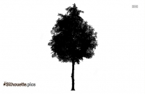 Cocounut Tree Drawing Silhouette