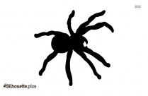 Insect Spider Clip Art Silhouette Image