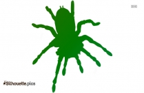 Insect Spider Silhouette