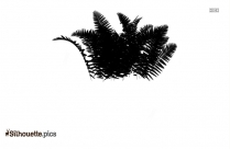 Jungle Ferns Silhouette Image