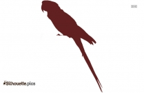 Parrot Bird Drawing Clipart Silhouette