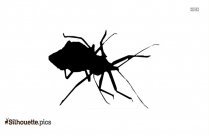 Kissing Bugs In United States Silhouette