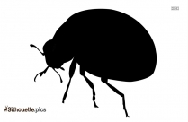 Ladybug Insect Silhouette Background