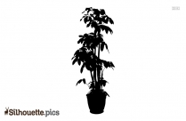 Large Indoor Plant Pots Silhouette