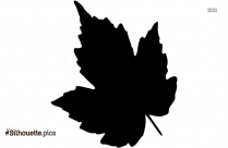 Leaf Black And White Silhouette Image