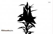 Lilium Flower Silhouette Vector Image